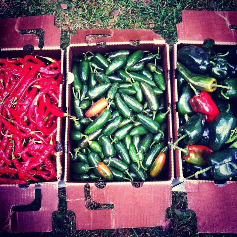 Optional Hot Peppers- from left to right red chilis, jalapeno and poblano