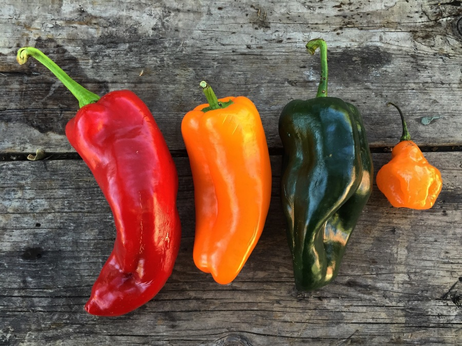 Italian frying, mini bell, poblano and (optional) habanero pepper
