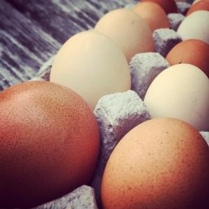 wrong direction farm's beautiful eggs!