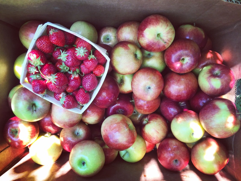 what's in the bagless fruit share?
