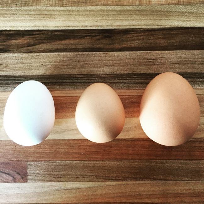celebrating diversity with wrong direction farm eggs