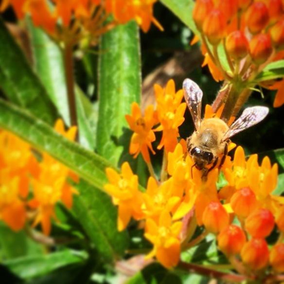 the ladies at Bee My Honey Apiary hard at work again